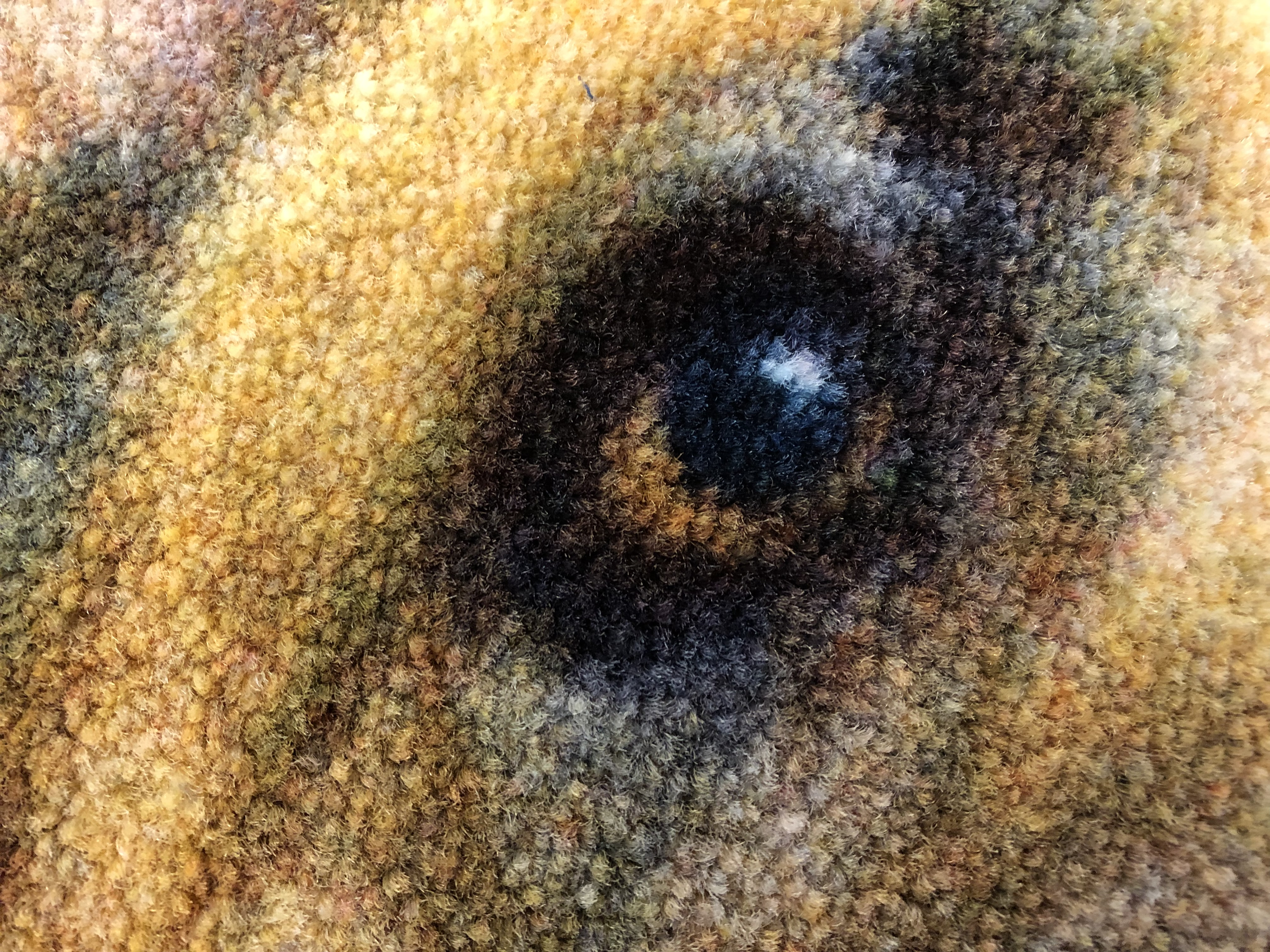 Close up image of your pet