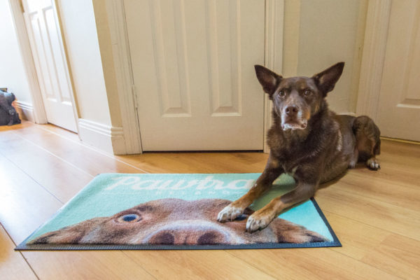 Give your dog a personalised gift